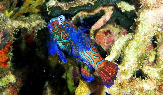 Dan's Dives Malapascua