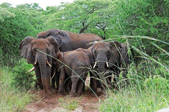 Tembe Elephant Park Accommodation: Game Drive