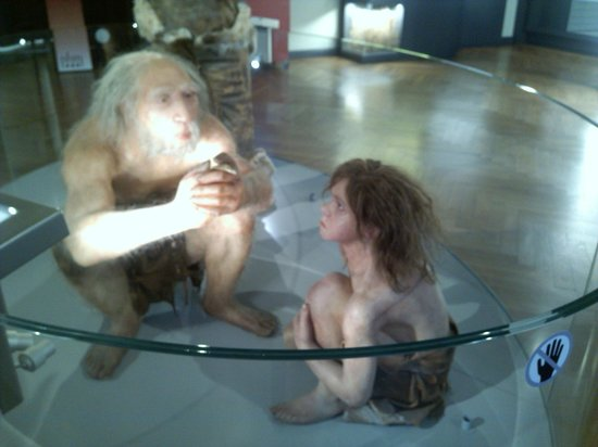 Museo de Historia Natural: Музей