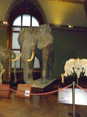Muséum d'histoire naturelle de Vienne : Музей