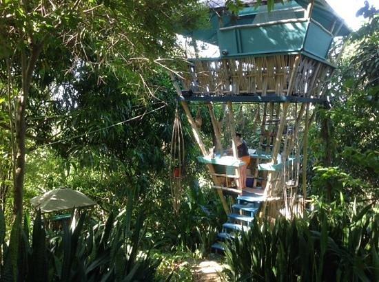 Tropical Treehouse: Hooch and bathroom below.