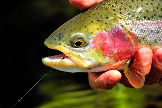 Fishing directly below Horseshoe Bend on the Colorado ...