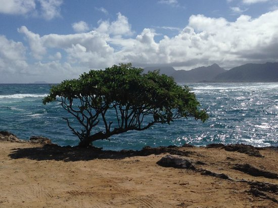 Discover Hawaii Tours: Windward Oahu