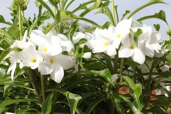 Fleur De Monoi Foto Van Domaine De La Mangrove Somone Tripadvisor