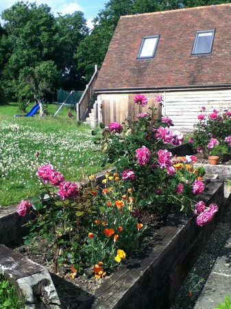 Rosebank B&B: Roses at Rosebank