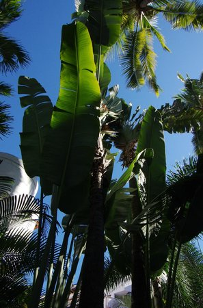 Buenaventura Grand Hotel & Great Moments All Inclusive: beautiful landscaping