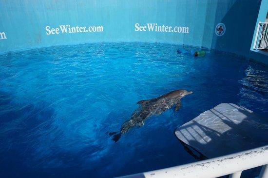 Dolphin Encounter Clearwater Marine Aquarium Picture Of Clearwater Marine Aquarium Clearwater