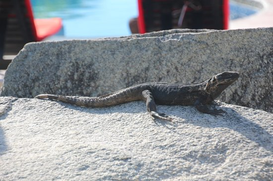 Gecko Rock Resort : resort resident