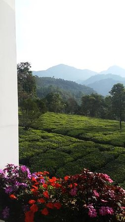 Gruenberg Tea Plantation Haus: View of the plantations from the restaurant