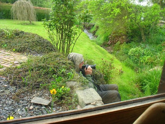 Knowbury, UK: A visitor filming birds in the garden