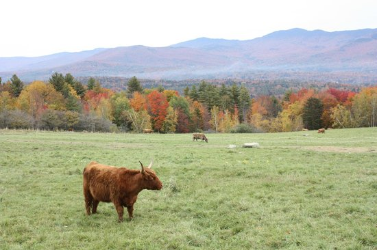 Trapp Family Lodge : Pasture in front of lodge