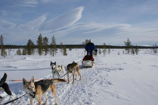 Lapland Hotel Hetta: raid chiens de traineaux