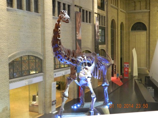 Royal Ontario Museum (ROM): Entrance