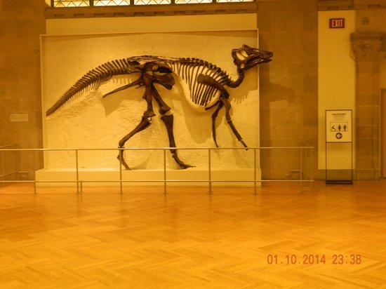 Royal Ontario Museum (ROM): Dinosaur