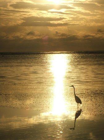 Tranquility Bay Resort照片