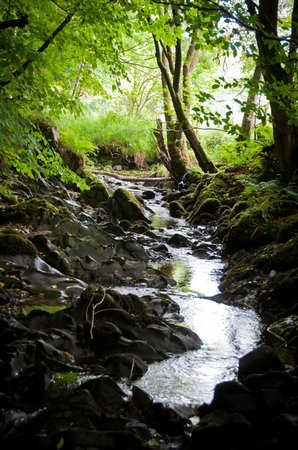 Cosses Country House: Crailoch Burn and woodland