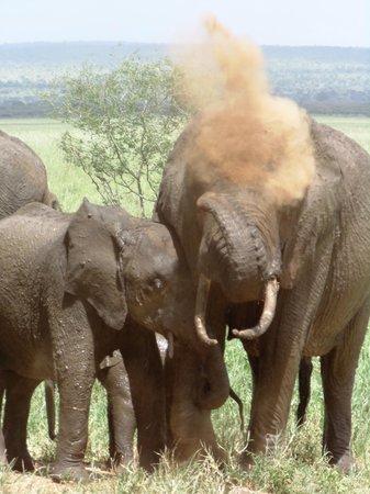 Tarangire Safari Lodge : Elephants