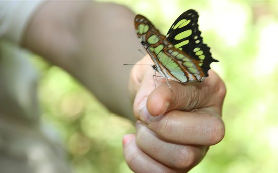 Yacutinga Lodge: lots of beautiful coloring  butterfly you find at the lodge