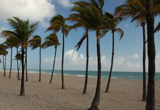 Grand Palm Plaza : Beach is a few blocks away