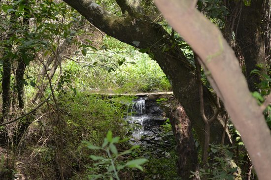Sarova Mara Game Camp : Our bubbling brook