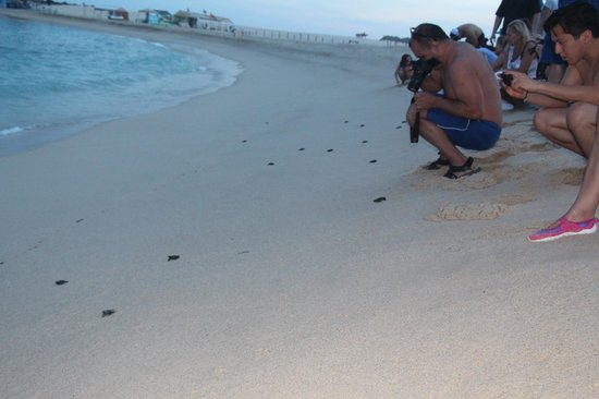 "Hilton Los Cabos Beach & Golf Resort : The release! People watching ""their"" turtles go to the ocean"