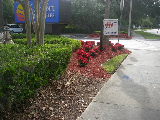 Comfort Suites Downtown : entrance from road lovely flowers