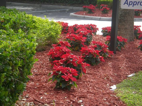 Comfort Suites Downtown : flowers at the front of the hotel-well kept grounds