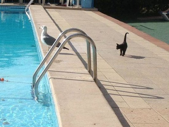 Monica Isabel Beach Club: Talk about punching above your weight: needless to say, entertaining viewing, but seagull:1 kitt