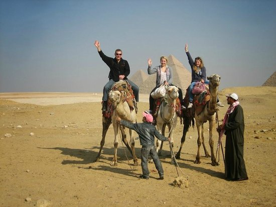 Egypt Day Tours: Camels!