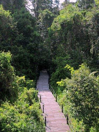 Abai Jungle Lodge : Walkways