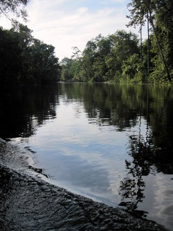 Abai Jungle Lodge : Kinabatangan River