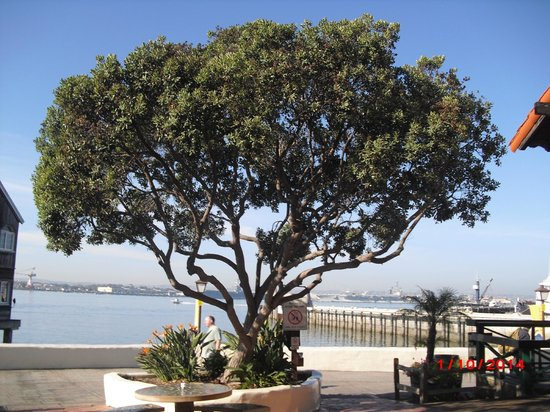 Old Town Trolley Tours of San Diego: Seaport Village
