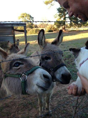 9E Ranch Texas Cabins : The Darling Donkeys meeting our Dog
