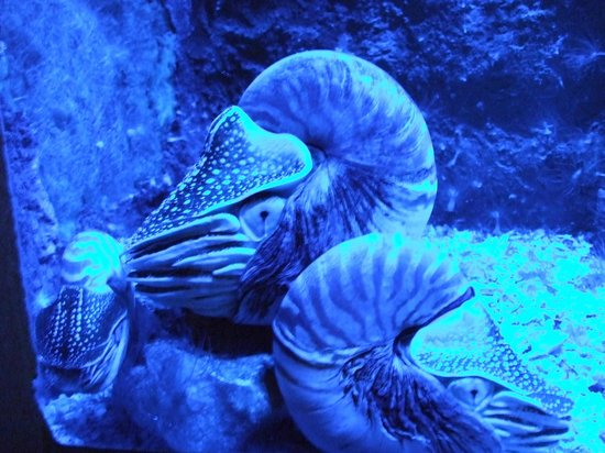Blue Reef Aquarium: Blue Reef