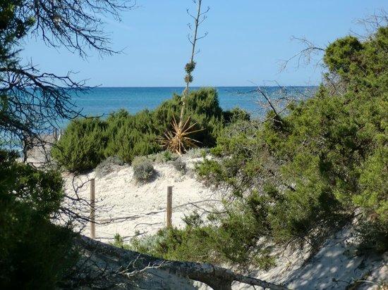 Playa de Es Trenc: DUNES