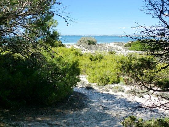 Playa de Es Trenc: PLAYA Y DUNAS