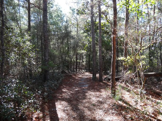 Fred Gannon Rocky Bayou State Park: Sand Pine Trail