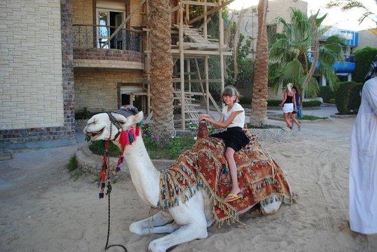 Hurghada SeaGull Beach Resort: Верблюд