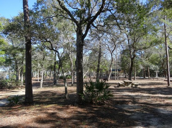 Niceville, FL: Lookig towards the picnic area (winter and some trees are bare)