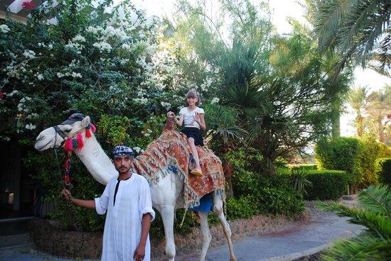 Hurghada SeaGull Beach Resort: прогулка через сад