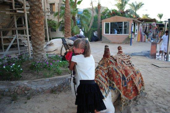 Hurghada SeaGull Beach Resort: Спасибо, Оскар!
