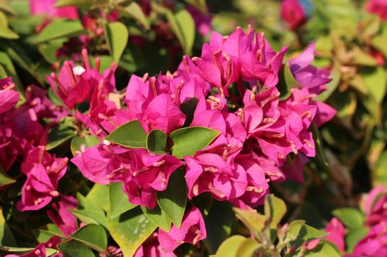 Sensimar Premier Le Reve: Цветы на территории