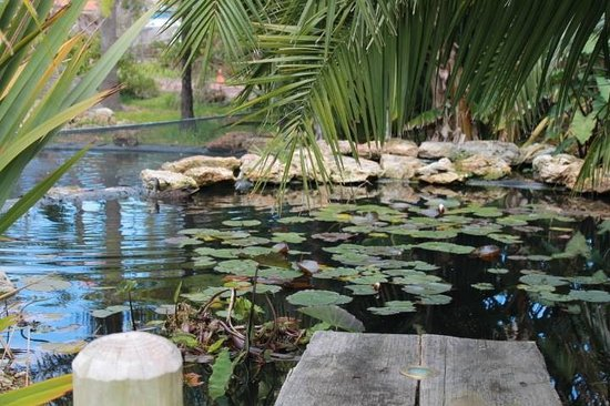 Albany Bali Style Accommodation: Frog pond at front