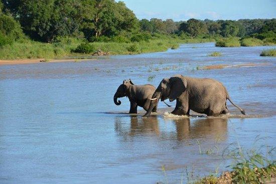 andBeyond Exeter River Lodge : safari