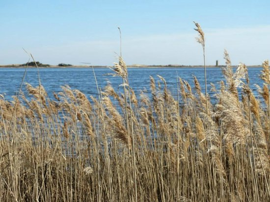 Gordons Pond: View through the grasses