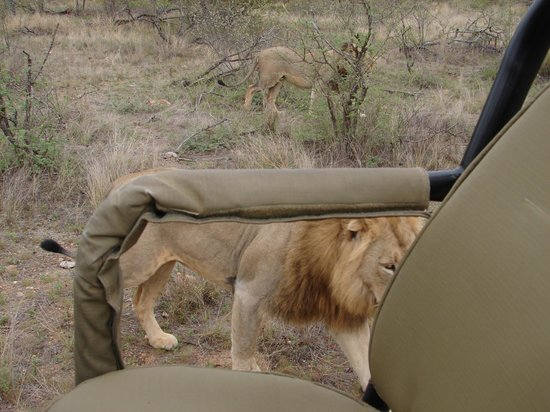 Mohlabetsi Safari Lodge: Close enough to touch!