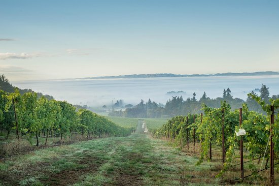 Winter's Hill Vineyard: Looking South over the Willamette Valley