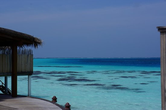 Constance Moofushi : Gorgeous coral reefs right outside the villa!