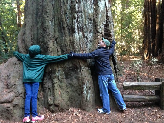 Henry Cowell Redwoods State Park: Hug a Tree!!!