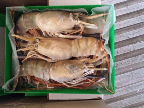Alimentos Mar Y Tierra